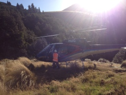 On set NZ